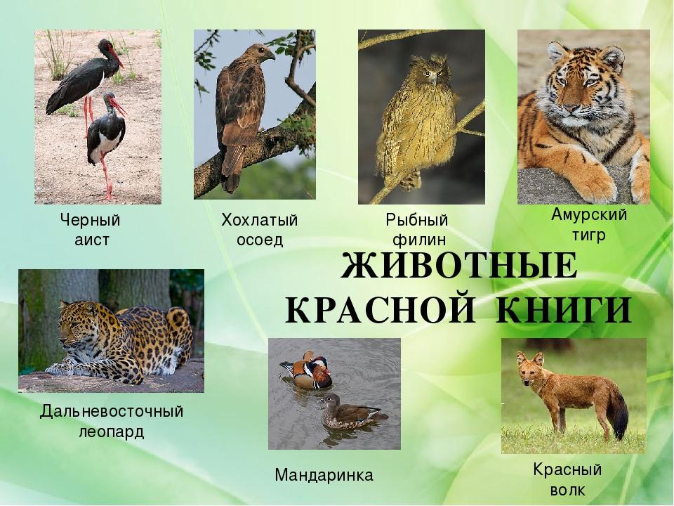 Картинки красной книги растения и животные