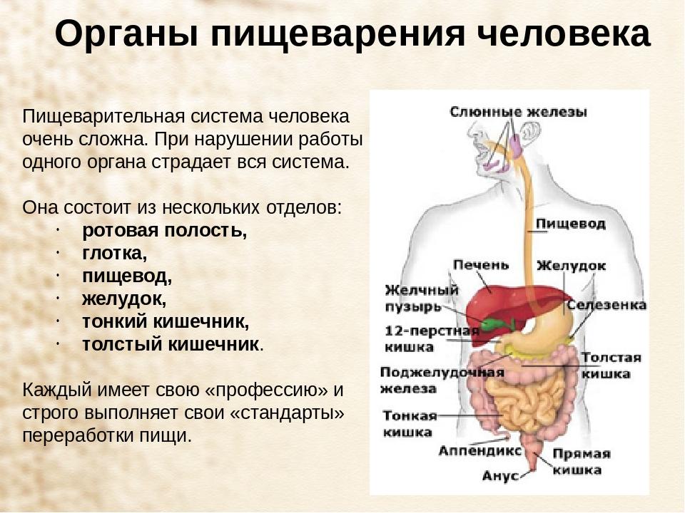 Диета Щадящая Все Органы Пищеварения. Лечебные диеты при заболеваниях желудочно-кишечного тракта