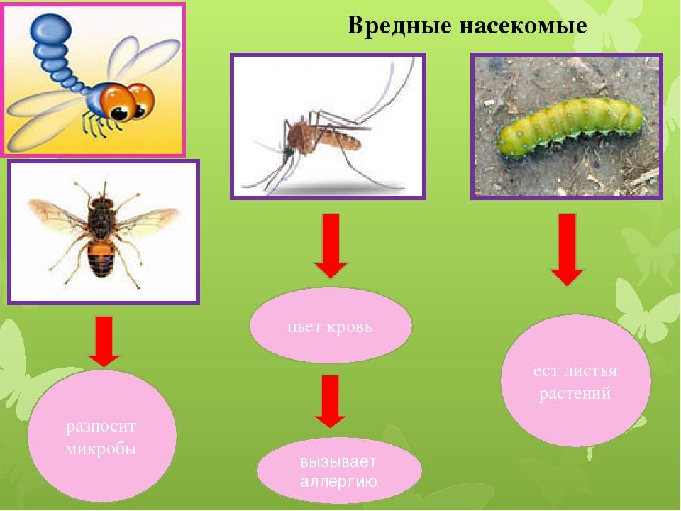 сделать вредные и полезные насекомые с картинками компании якохама полностью