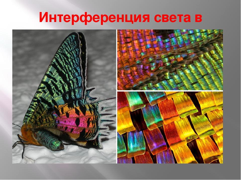 интерференция света фотографии