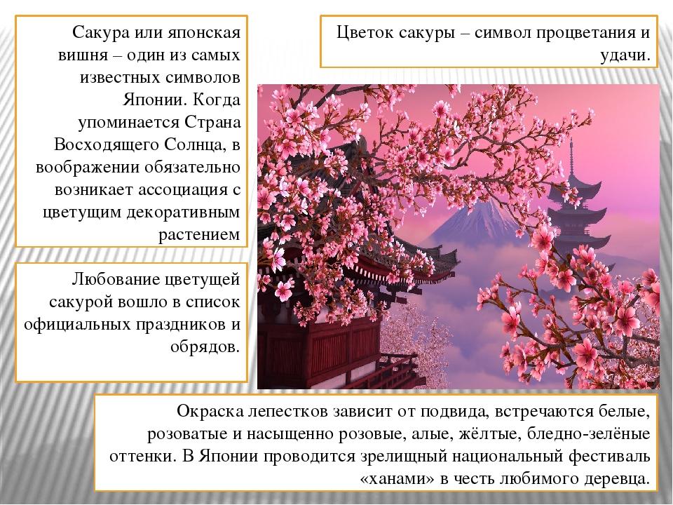 Сакура или японская вишня – один из самых известных символов Японии. Когда уп...