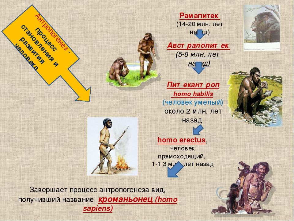 Антропогенез - процесс становления и развития человека Рамапитек (14-20 млн....