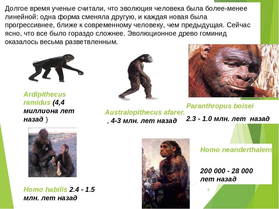 * * Долгое время ученые считали, что эволюция человека была более-менее линей...