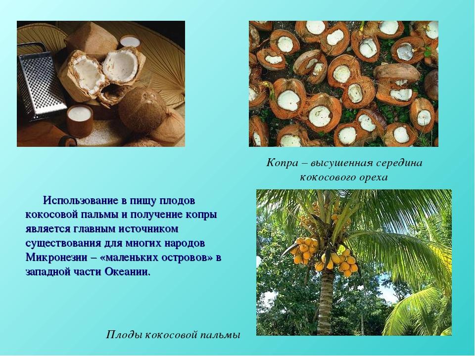 Использование в пищу плодов кокосовой пальмы и получение копры является глав...
