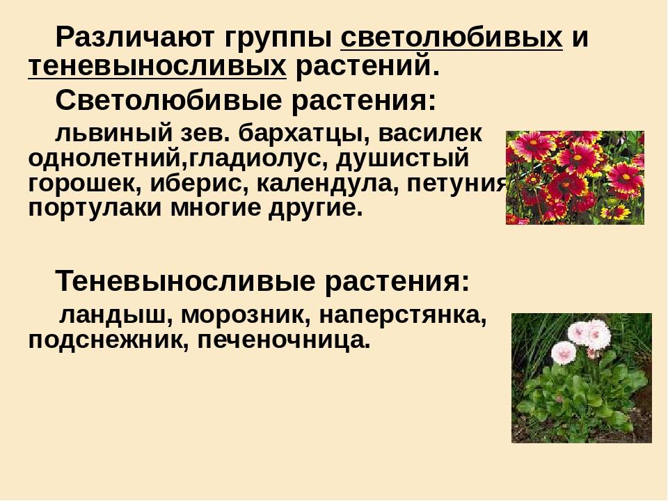 Различают группы светолюбивых и теневыносливых растений.  Различают группы с...