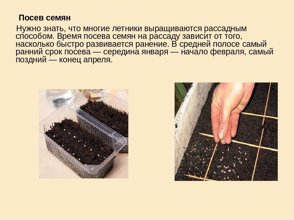 Посев семян  Посев семян Нужно знать, что многие летники выращиваются расса...