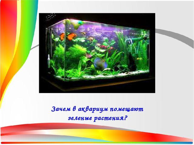 Конспекты для 6 класса на тему аквариум
