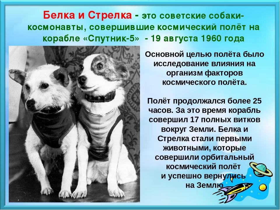 История про собак картинки