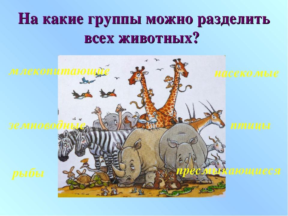 На какие группы можно разделить всех животных? млекопитающие птицы рыбы насек...
