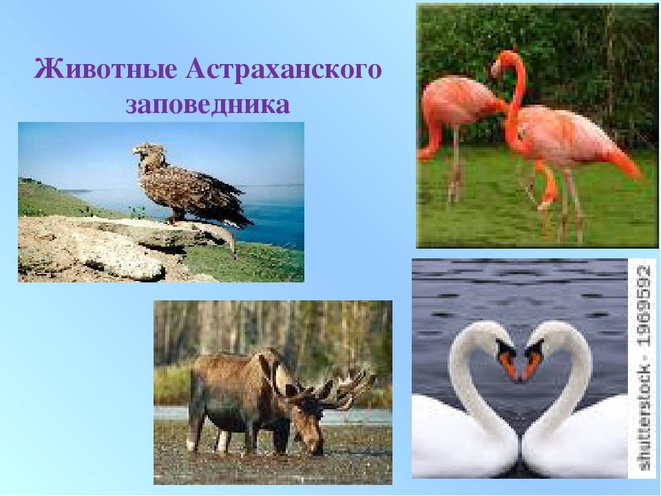 Животные Астраханского заповедника