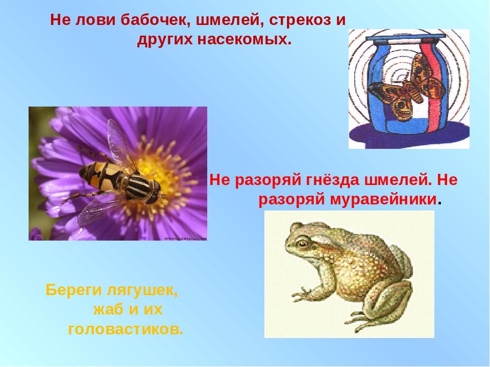 Не лови бабочек, шмелей, стрекоз и других насекомых. Не разоряй гнёзда шмелей...