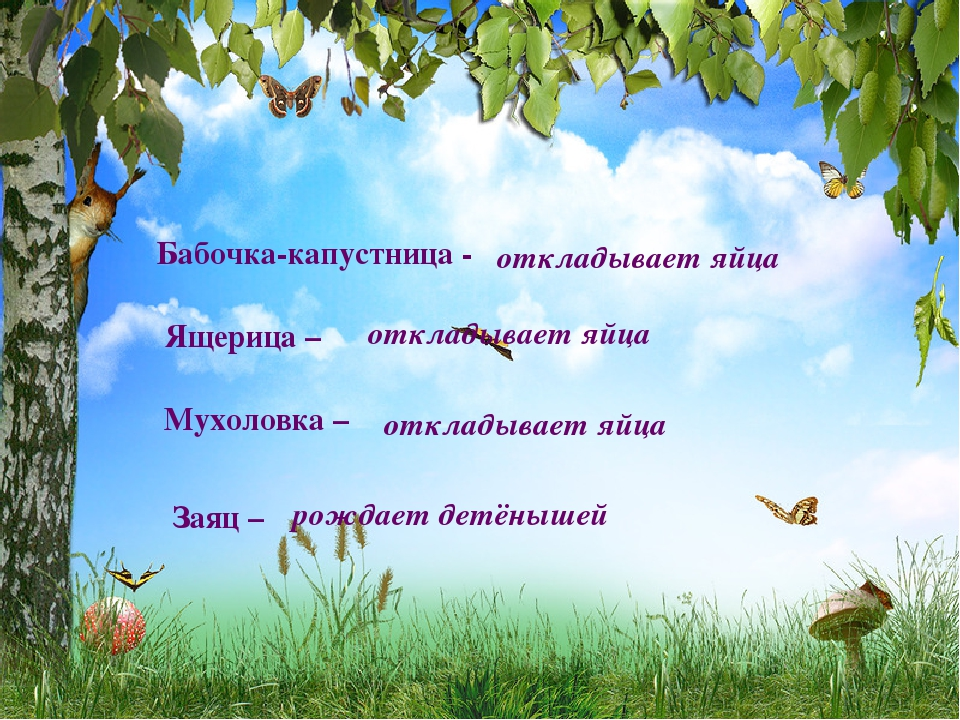 Бабочка-капустница - откладывает яйца Ящерица – откладывает яйца Мухоловка –...