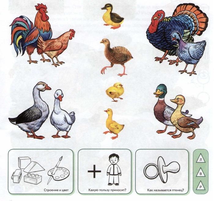 Картинки с изображением домашних птиц