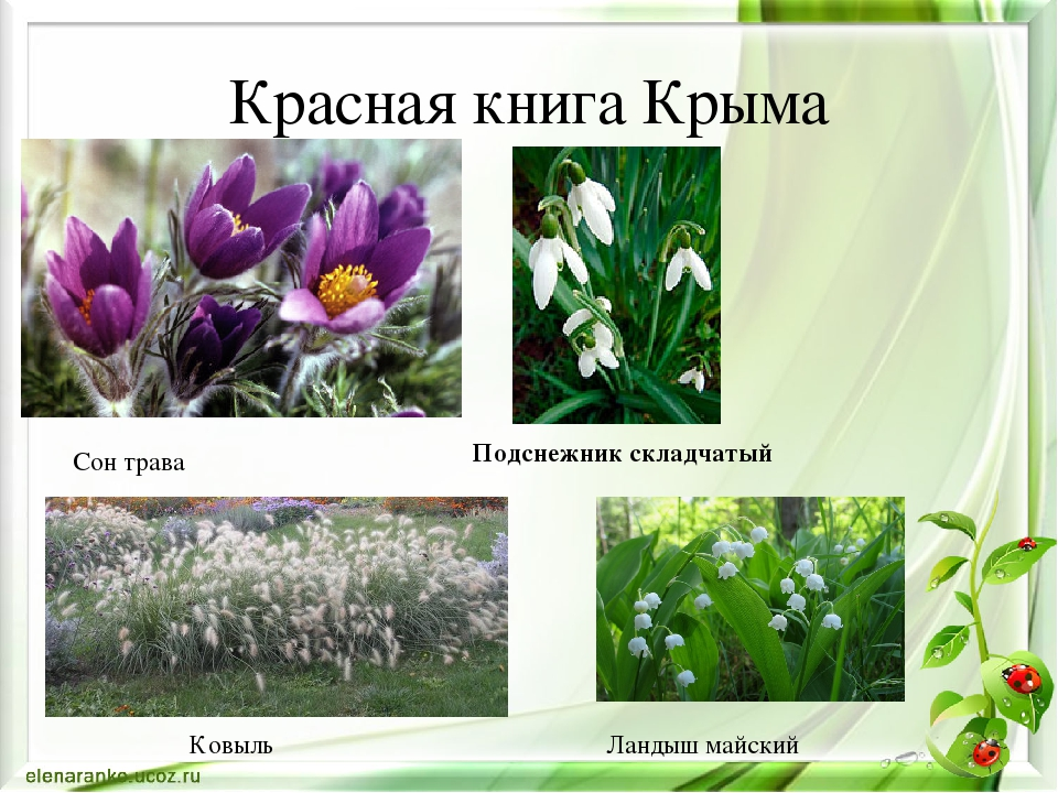 нужно растения красной книги крыма фото и описание сочетание светлого деревянного