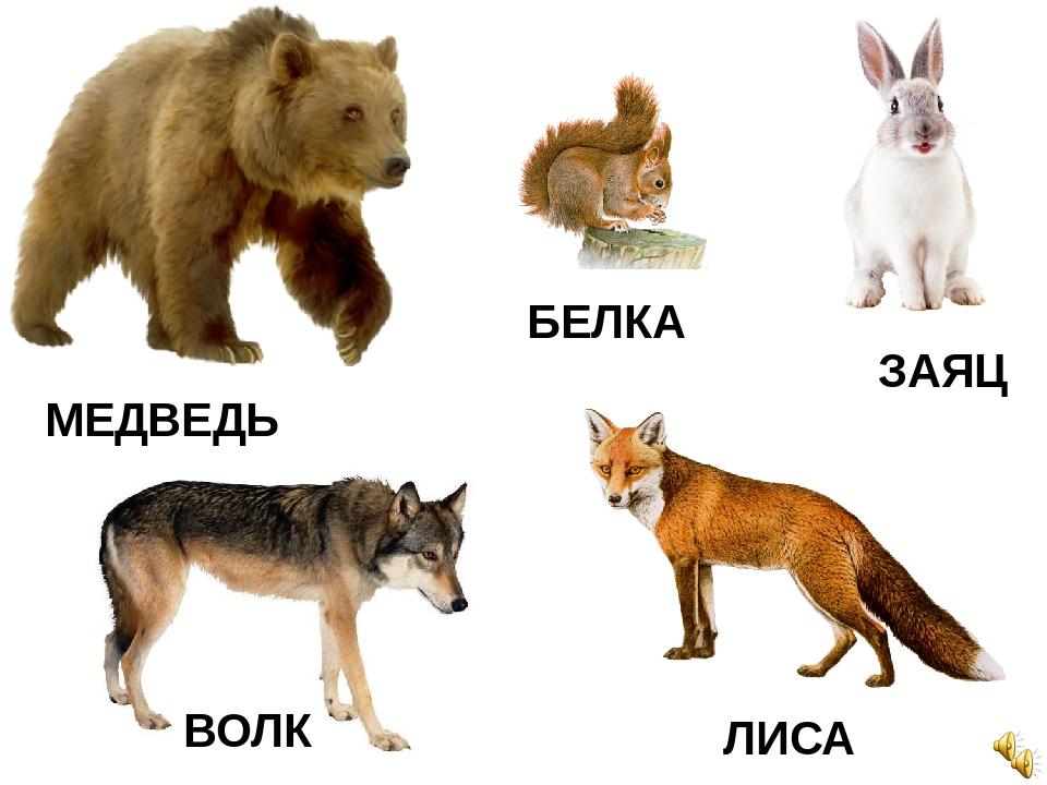 Картинки с изображением лисы медведя волка зайца совы и их детенышей, написать открытку