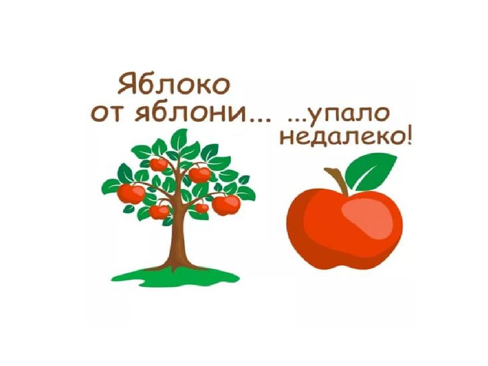 картинка яблоко от недалеко падает или