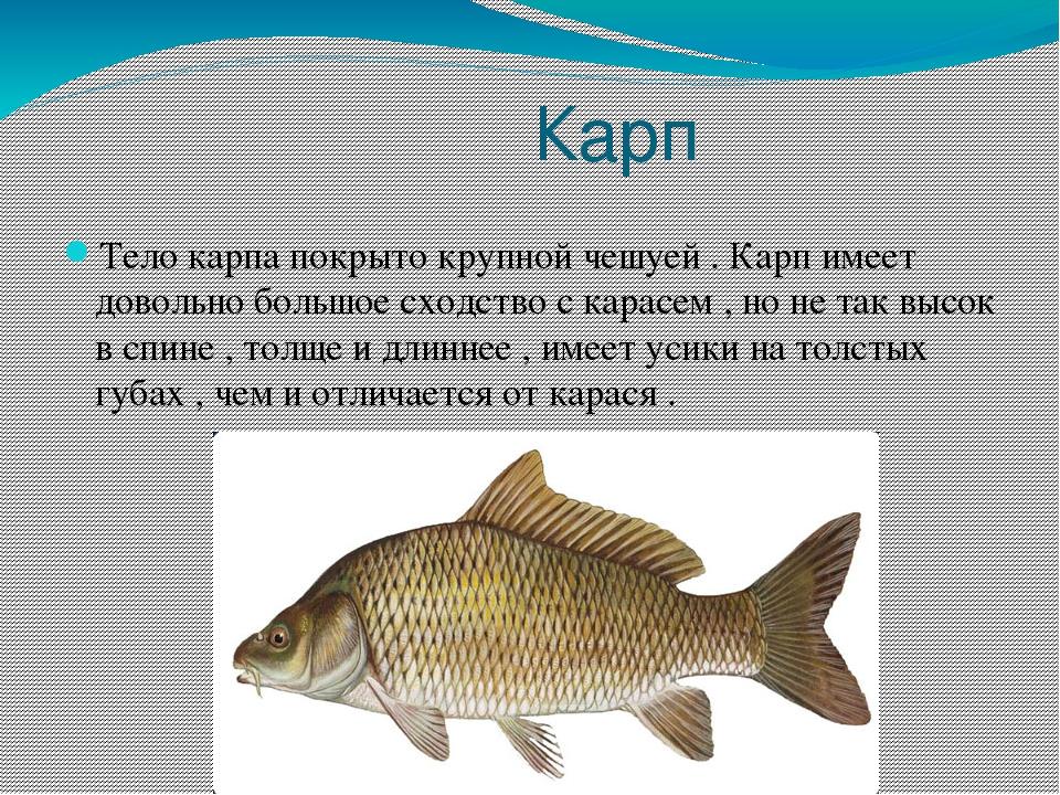 напоминает мелкая речная рыба фото и название необходимо помочь