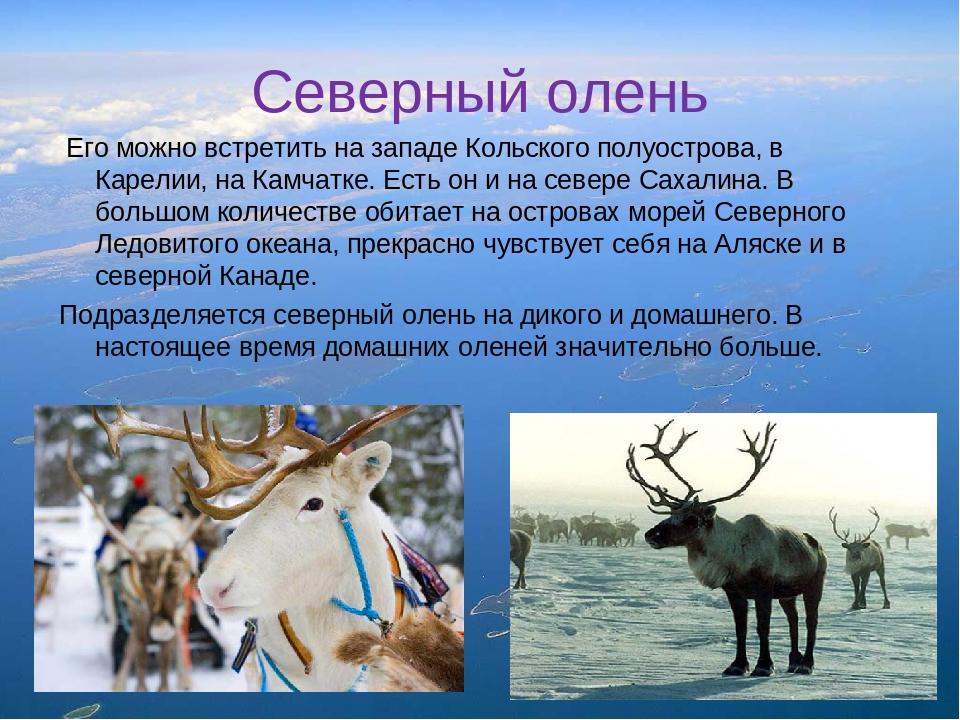 понял все об оленях фото описание видов нежность свет