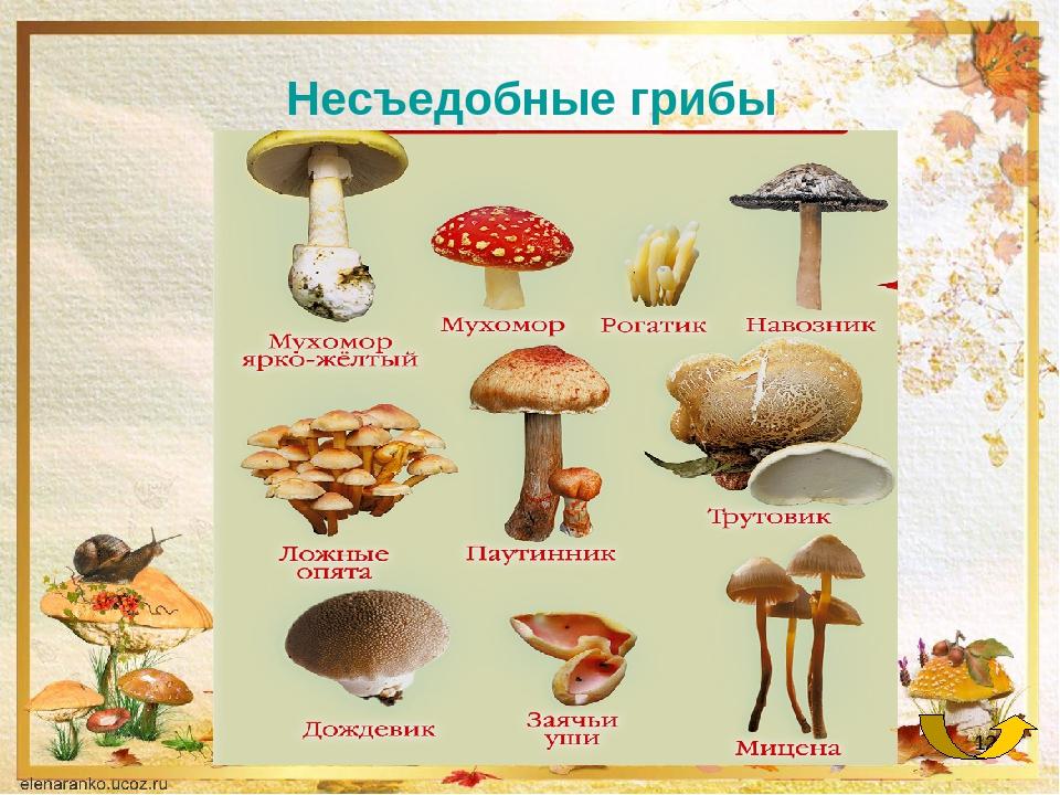 Список в картинках грибов