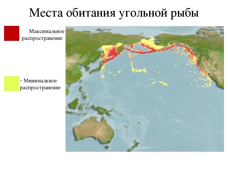 Места обитания угольной рыбы Максимальное распространение - Минимальное распр...