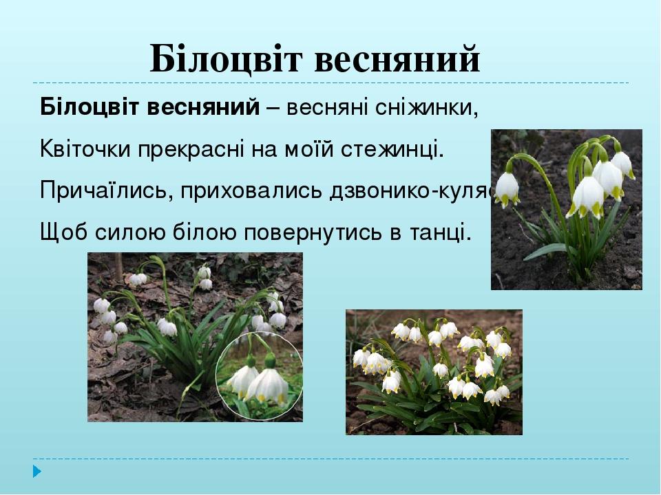 Білоцвіт весняний (leucojum vernum)