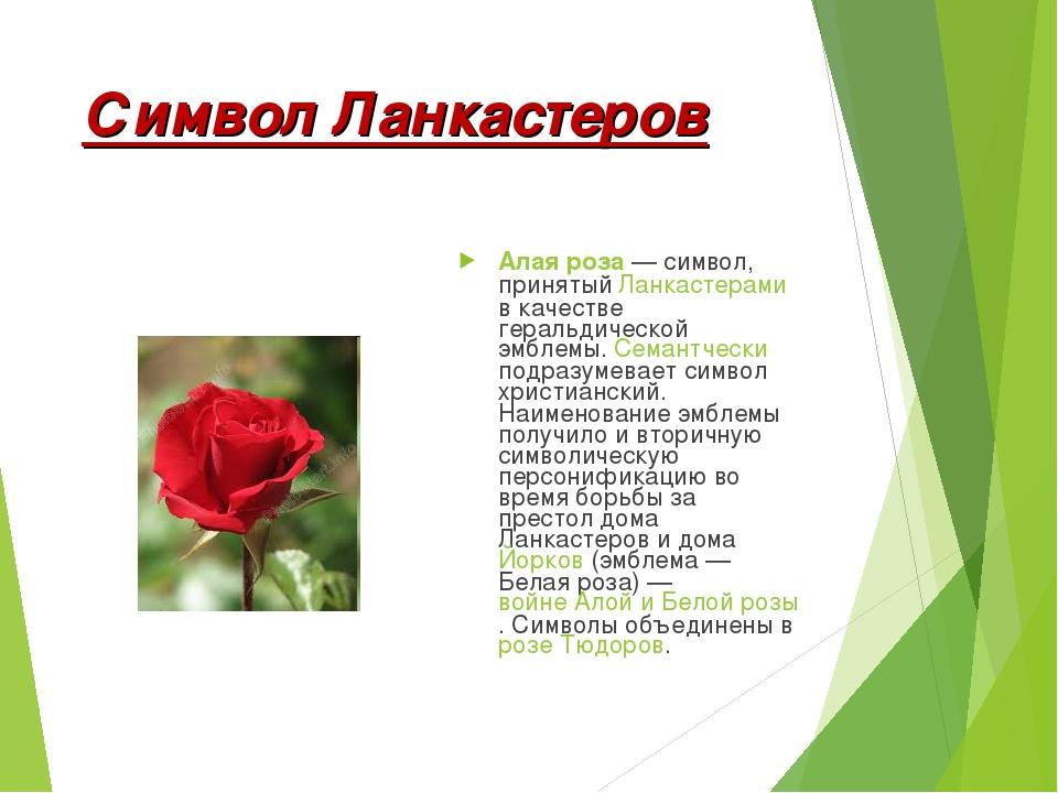 фото символа англии алой розы даже