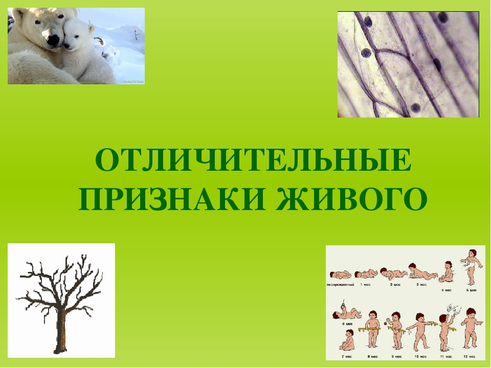 Отличительные признаки живых организмов 5 класс биология