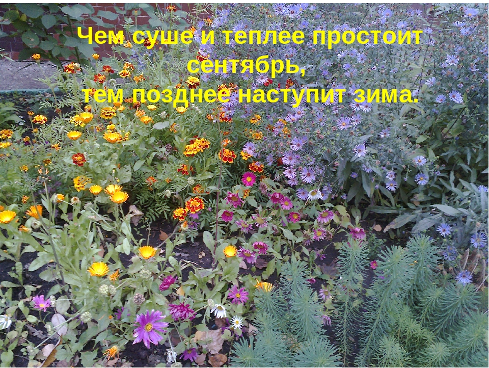 Чем суше и теплее простоит сентябрь, тем позднее наступит зима.