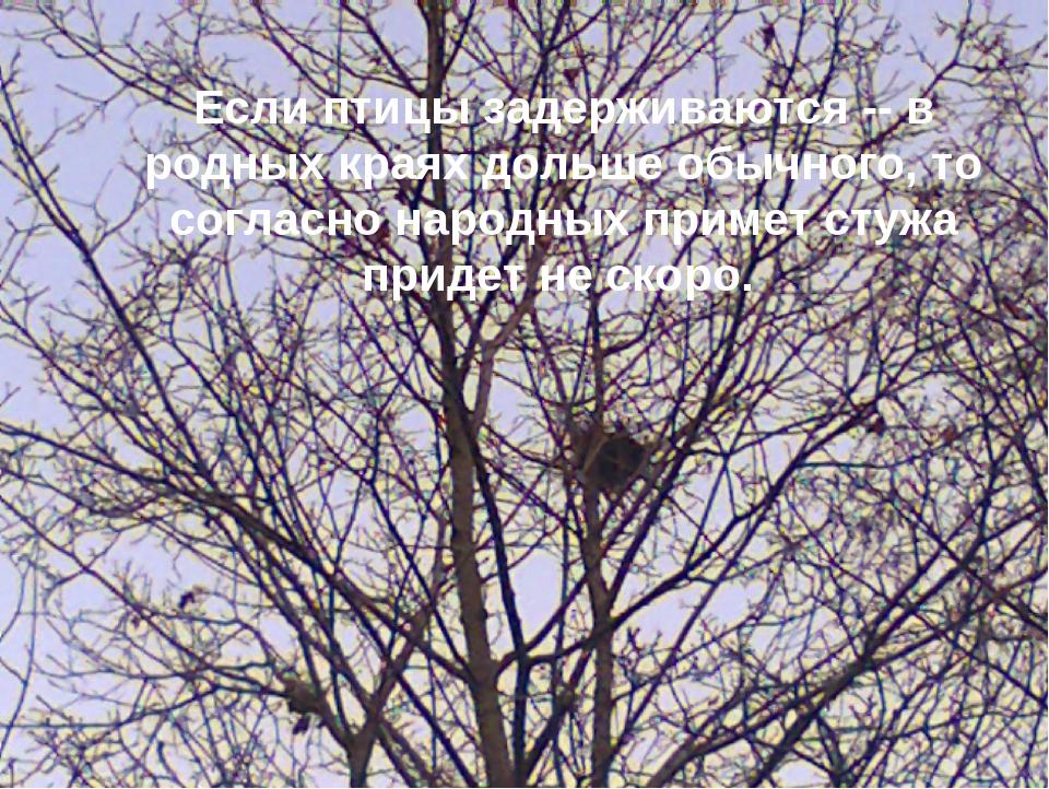 Если птицы задерживаются -- в родных краях дольше обычного, то согласно народ...