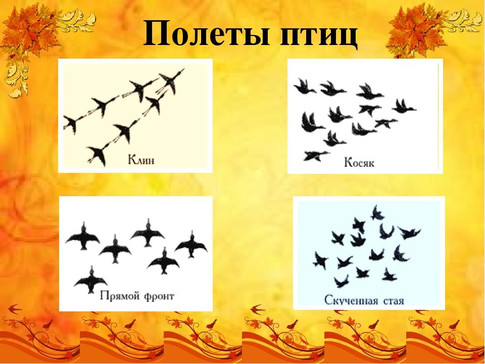 Полеты птиц