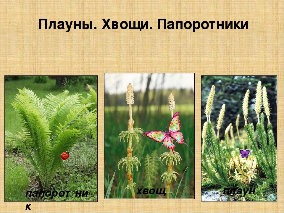 хвощи плауны картинки казахстане