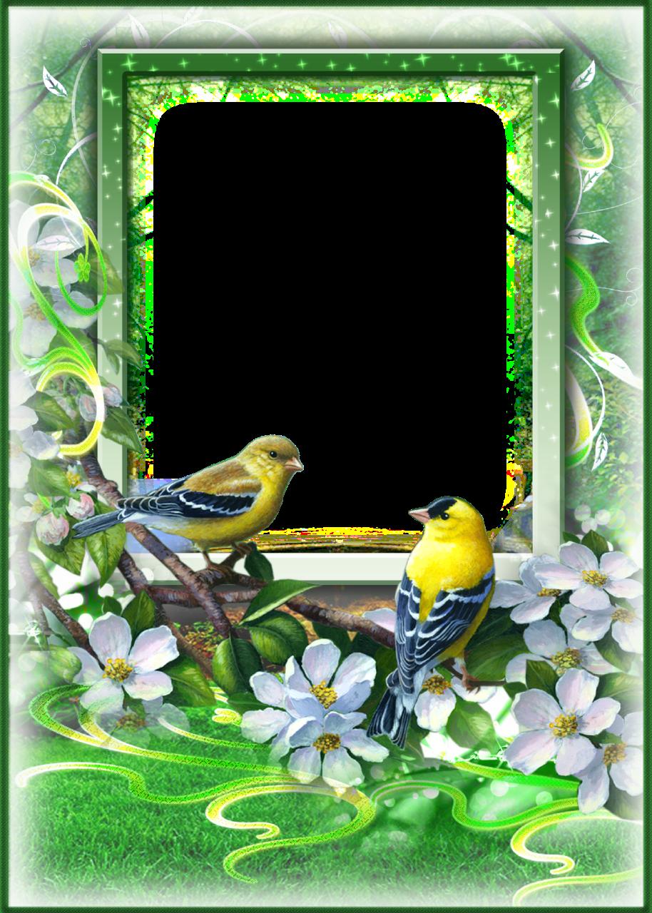 фоторамка с птицами несколько