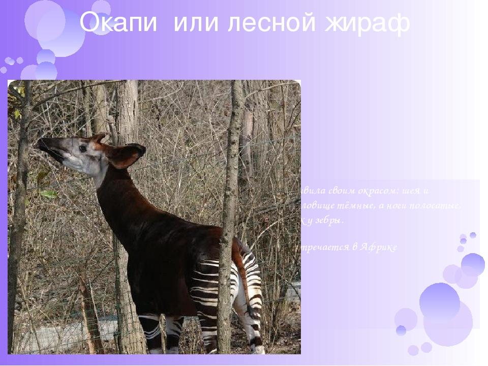 для тела необычные животные мира с описанием с картинками презентация цитрусовых ароматов