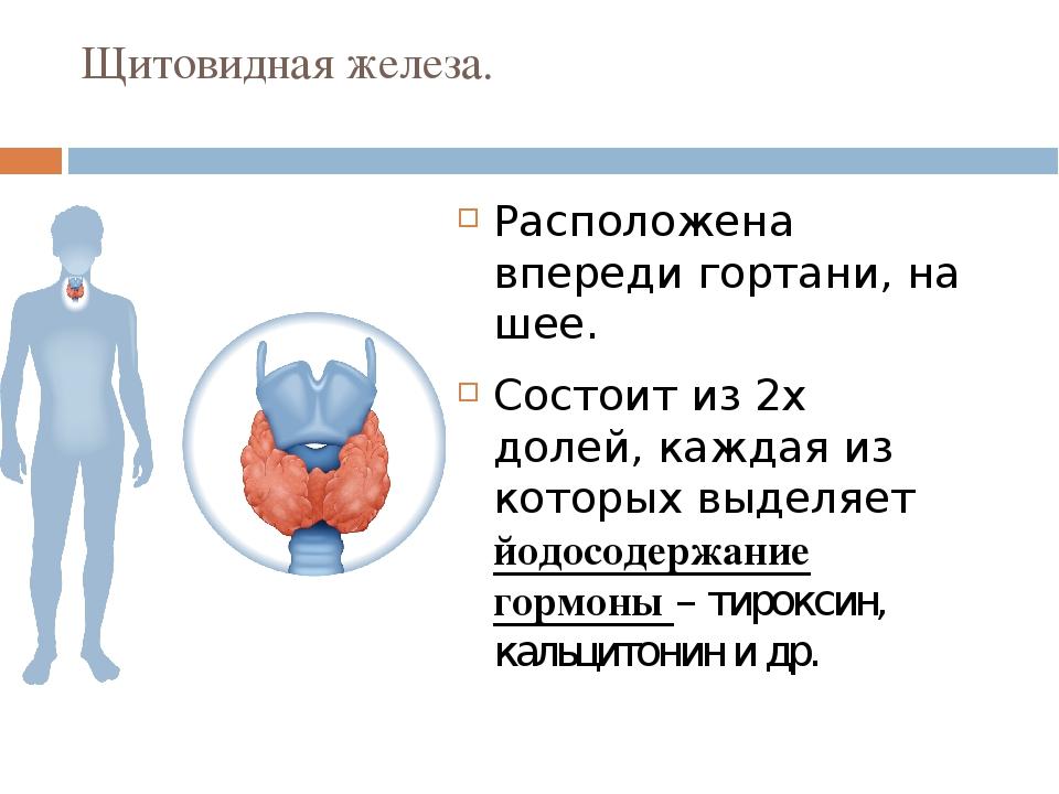 Щитовидная железа. Расположена впереди гортани, на шее. Состоит из 2х долей,...