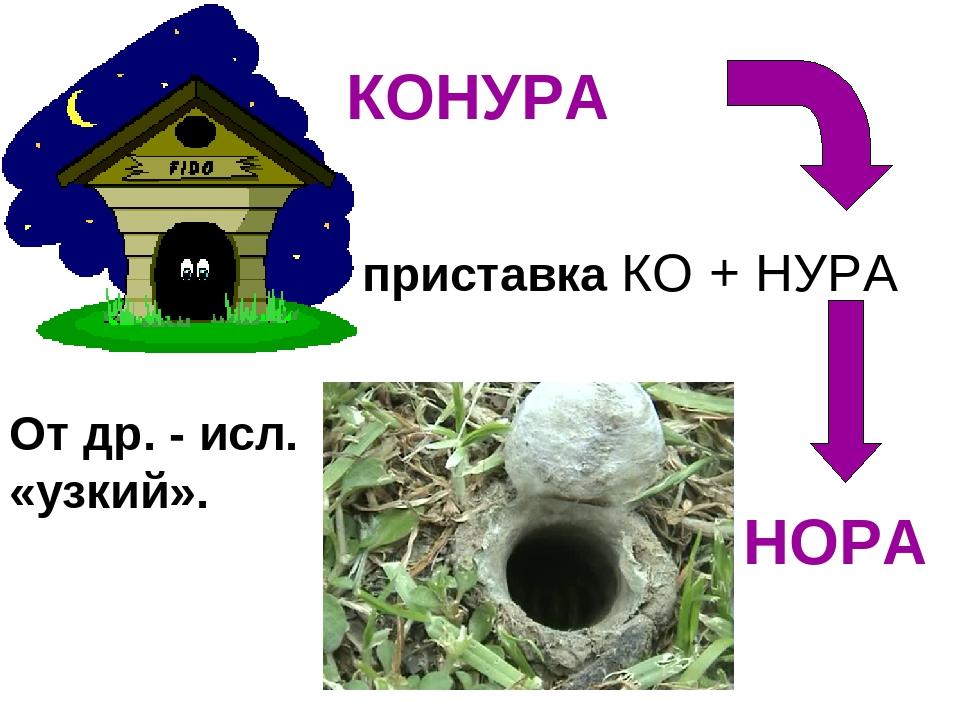 КОНУРА НОРА приставка КО + НУРА От др. - исл. «узкий».