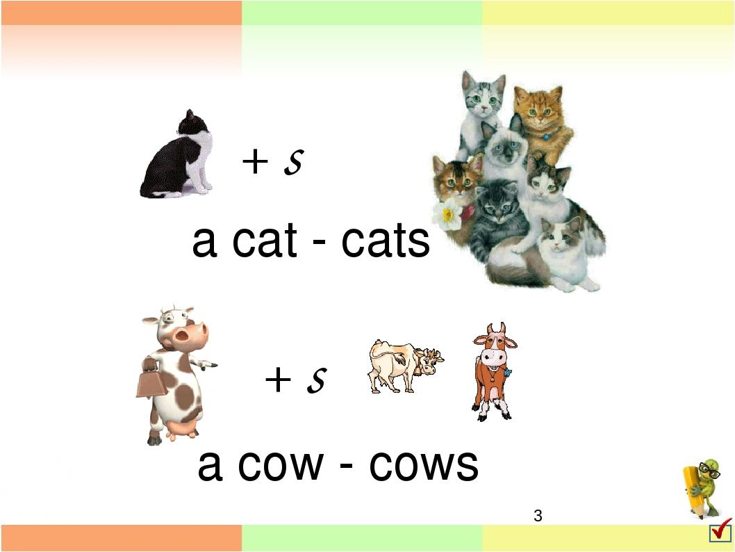 картинки животные множественное число машина, которая