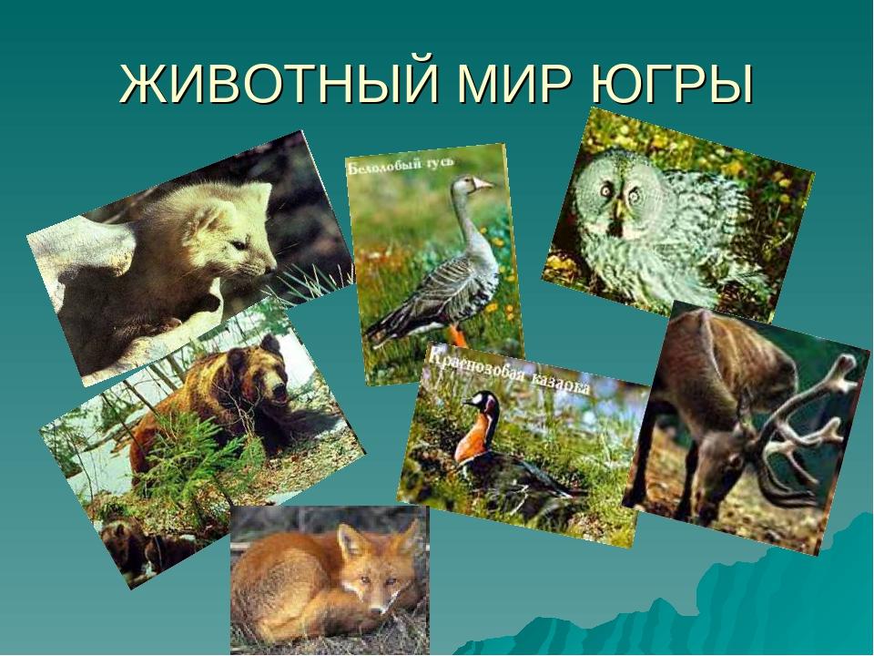 животный мир югры фото википедии есть статьи