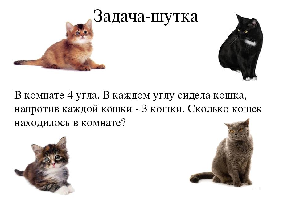 сомневаться, загадка про кошек в комнате босоножки высокой шпильке