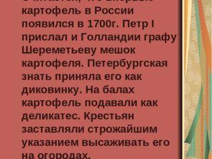 Появление картофеля в России Считается, что впервые картофель в России появи