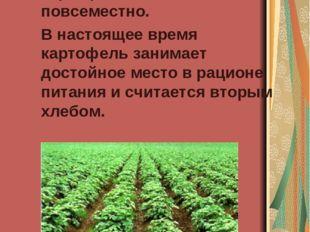 Были произведены крупные закупки его семян в Англии, Пруссии, Польше. И карт