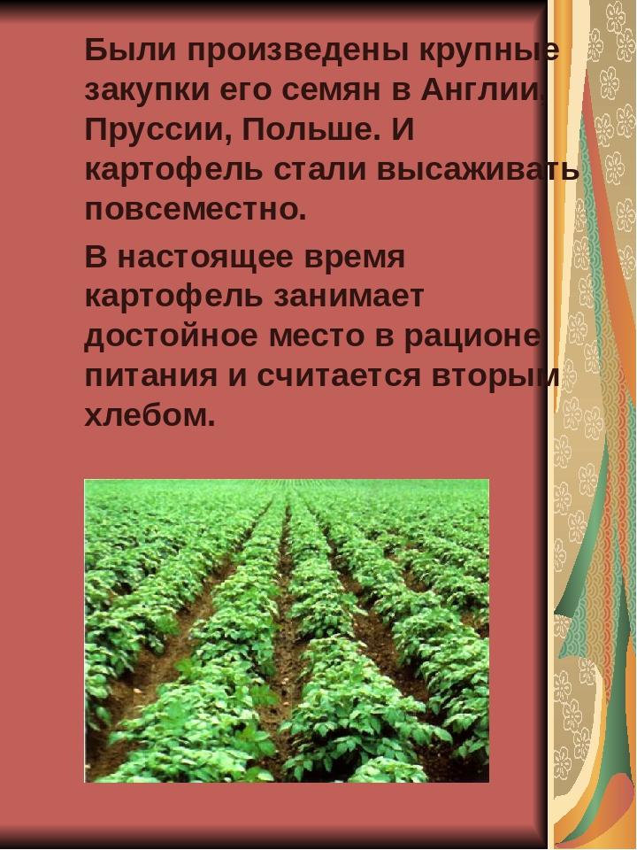 Были произведены крупные закупки его семян в Англии, Пруссии, Польше. И карт...