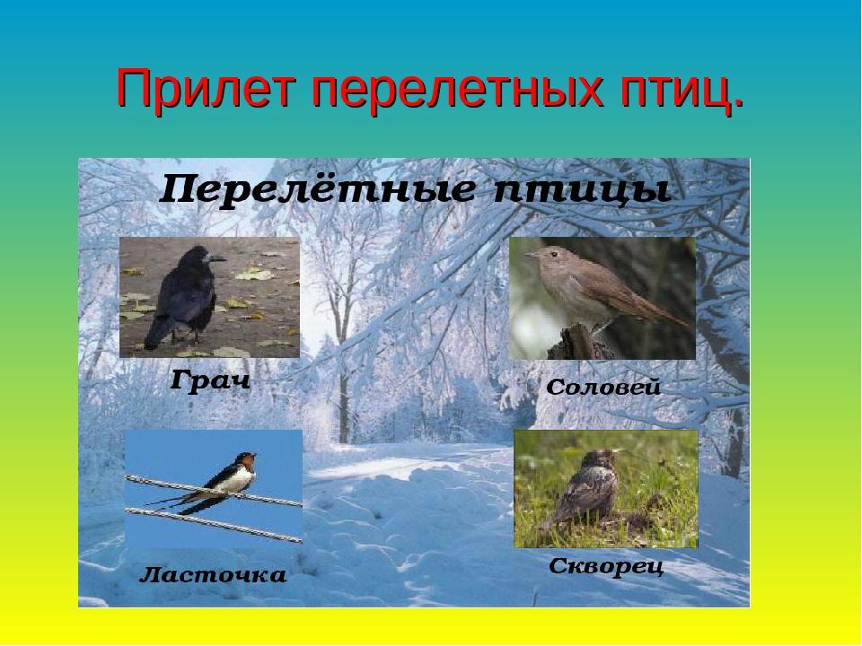 Прилет перелетных птиц.