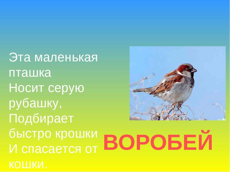 ВОРОБЕЙ Эта маленькая пташка Носит серую рубашку, Подбирает быстро крошки И с...