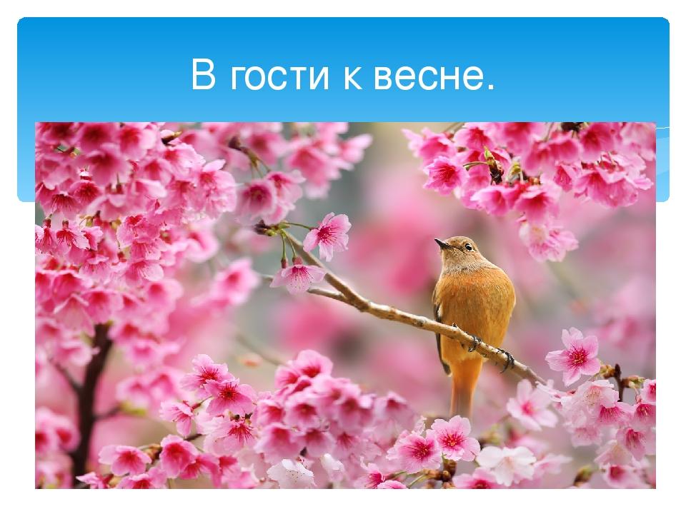 В гости к весне.