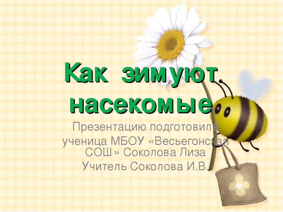 Как зимуют насекомые Презентацию подготовила ученица МБОУ «Весьегонская СОШ»...