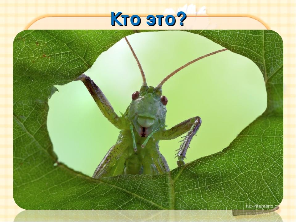 Кто это? Кто с листочка на травинку Быстро скачет вдоль тропинки? Кто так вес...