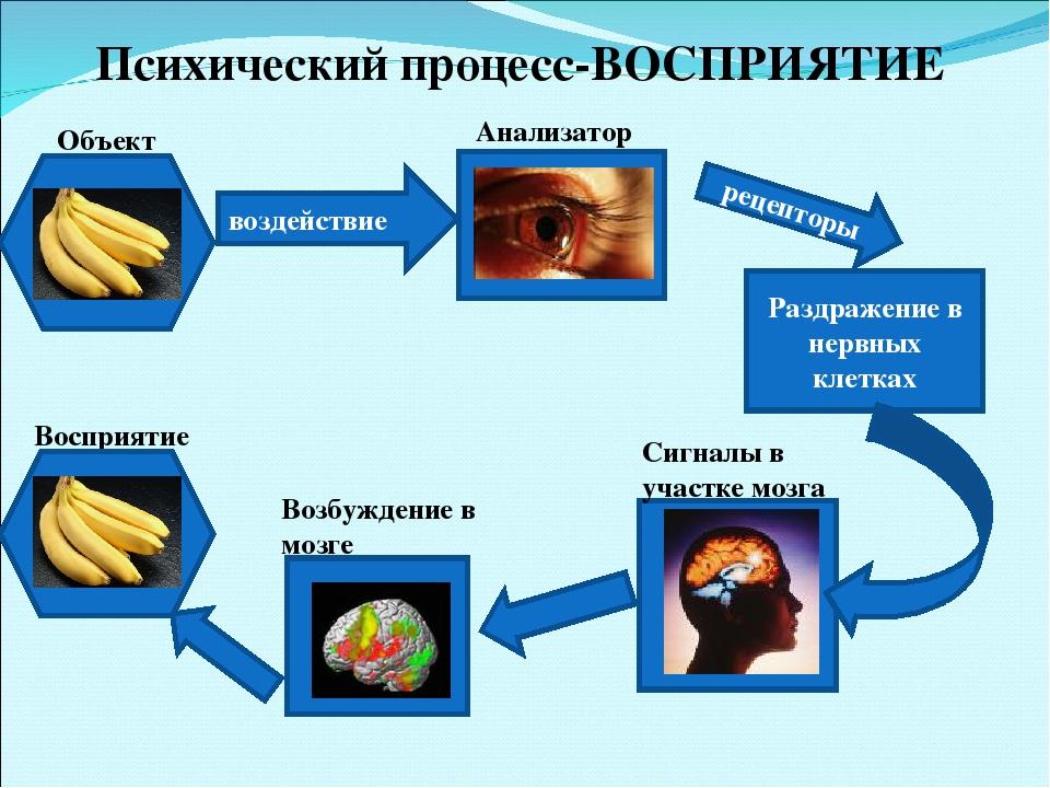 Психология восприятия информации на картинке