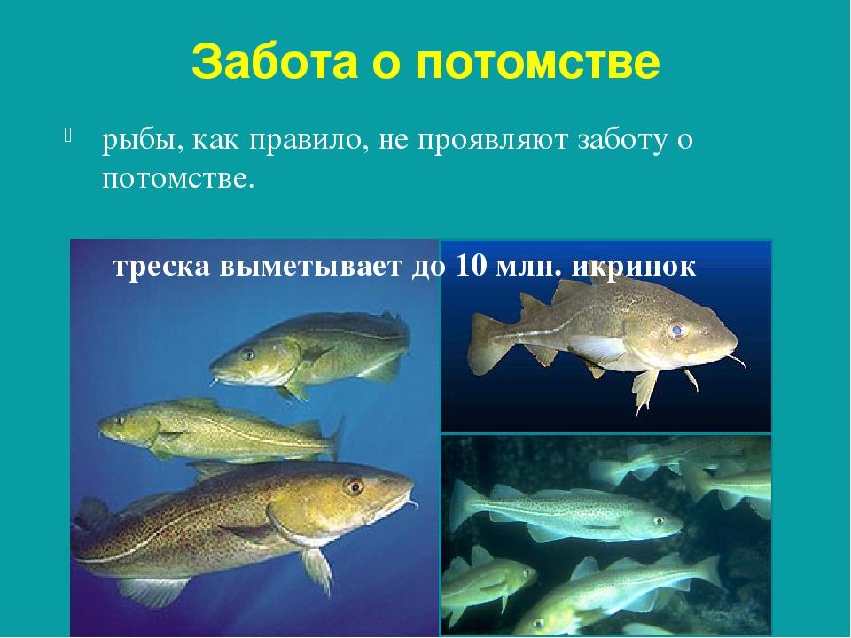 часто размножение и развитие потомства у рыб фото произошло преддверии