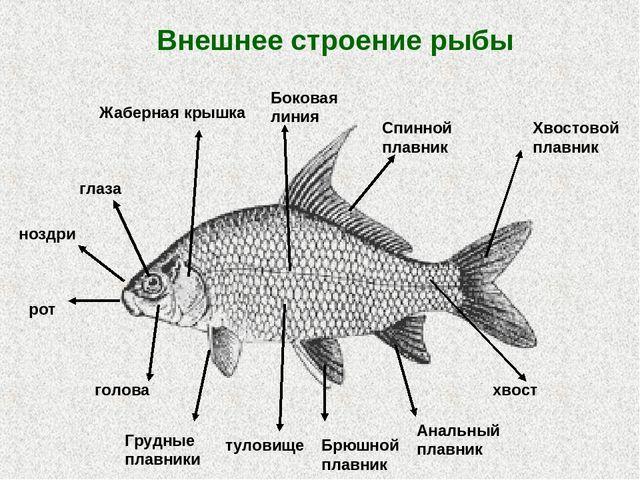 На занятии дети закрепляют знания по теме рыбы, обог