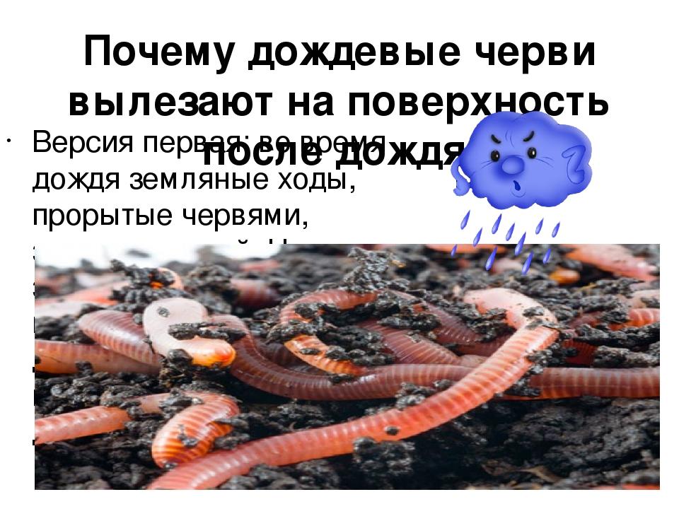 почему вылезают черви на асфальте